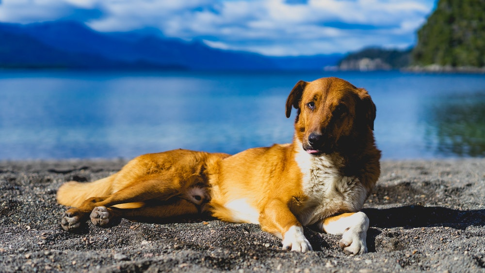 Argentina in general has a lot of street dogs, and Dan somehow worked magic and got them to pose for him. If this doesn't inspire you to hop a plane and drive off into Patagonia, then what does?