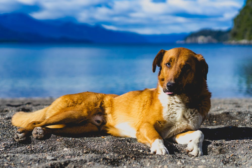Cover image for Dogs in Patagonia. Read more by visiting the article!
