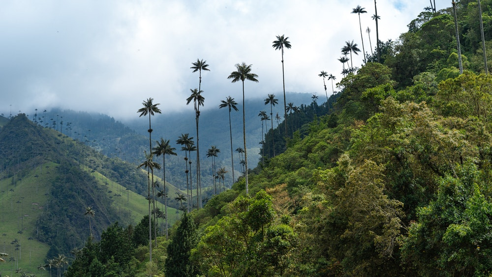 Cover image for Guide to Salento, Colombia. Read more by visiting the article!