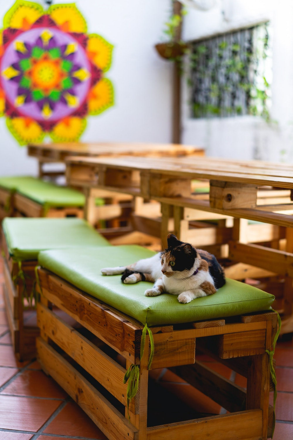 Cat laying on green bench pads on wooden benches