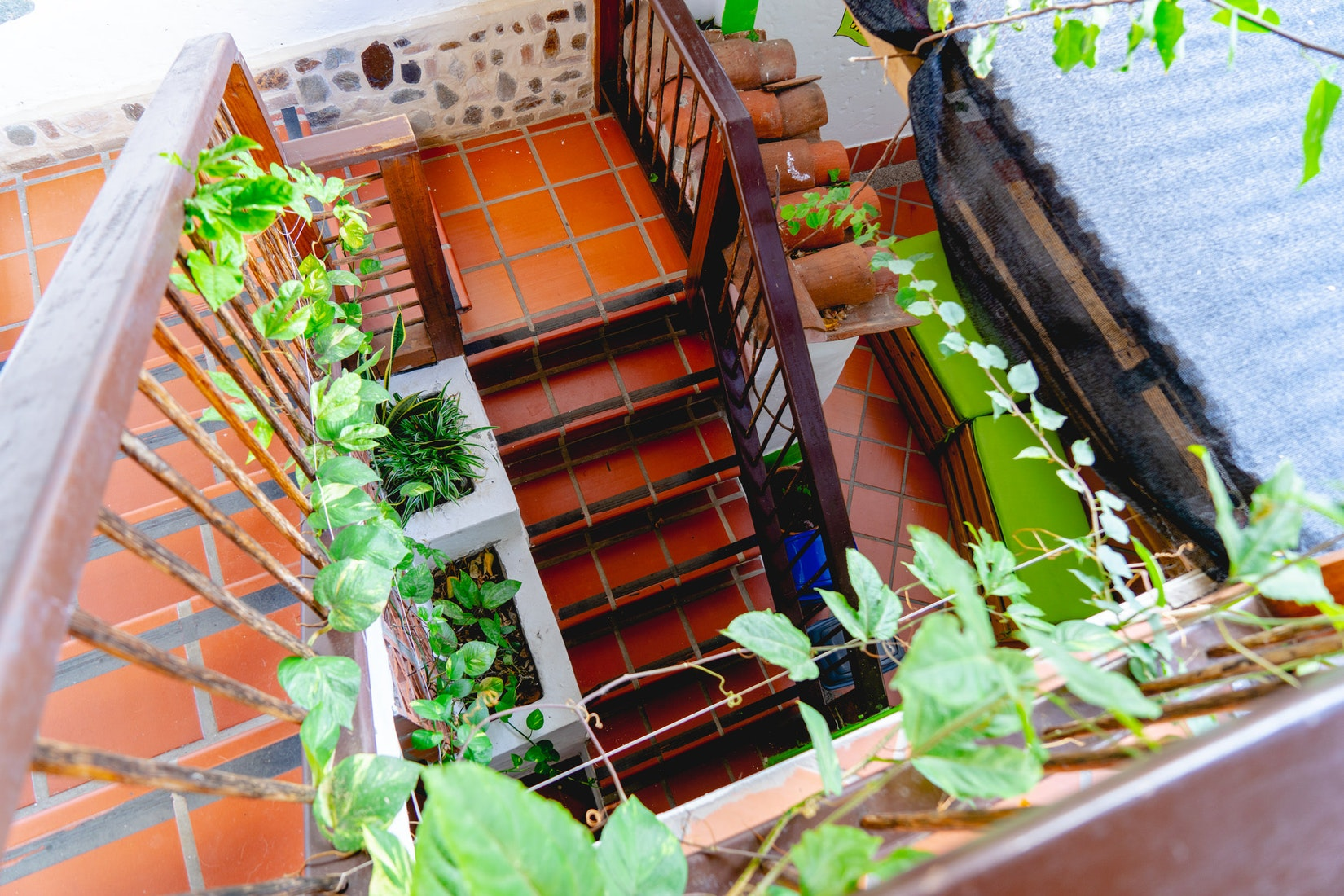 Wooden staircase framed by leafy green vines