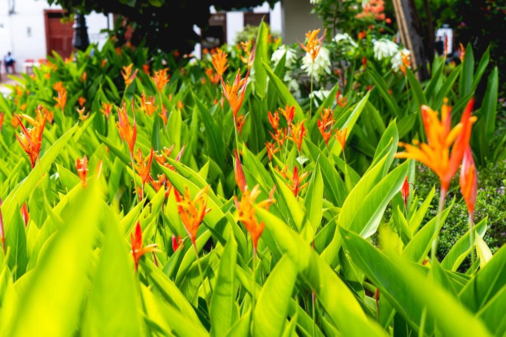 Flowers in the main square in Santa Fe de Antioquia, Colombia