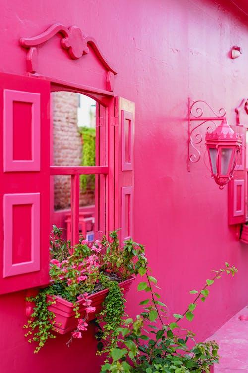 Instagram'daki pencerelerdeki aynalar Pink Street Puerto Plata şehri Dominik Cumhuriyeti'ni gösteriyor