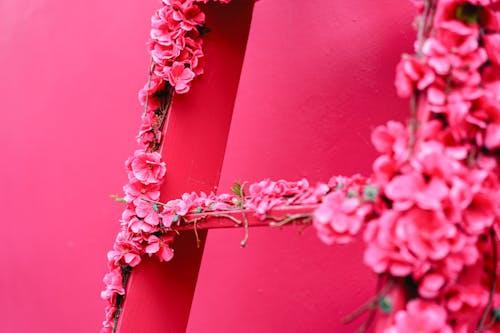 Pink Street Puerto Plata şehrinde Dominik Cumhuriyeti'ndeki bir merdivende çiçek detayları