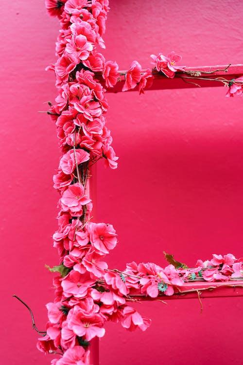 Pink Street Puerto Plata şehrinde Dominik Cumhuriyeti'nde bir merdiveni kaplayan çiçekler