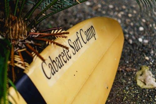 Dominik Cumhuriyeti'ndeki hostelde kabare sörf kampı sörf tahtası