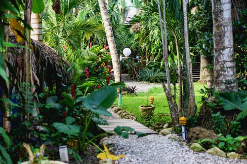 Cabarete sörf kampı Dominik Cumhuriyeti'nde orman bitkileri ile güzel bakımlı alanlar