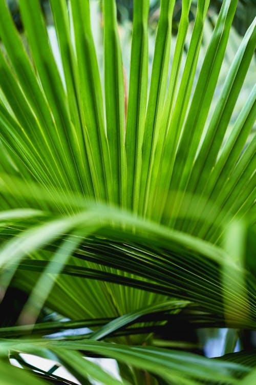 Dominik Cumhuriyeti'ndeki Surf Camp Cabarete'de tropikal orman yeşili bitki