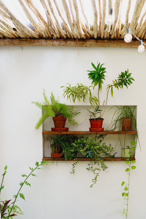 Vagamundo kafe Dominik Cumhuriyeti'nde Instagram dostu bitki duvar dekorasyonu