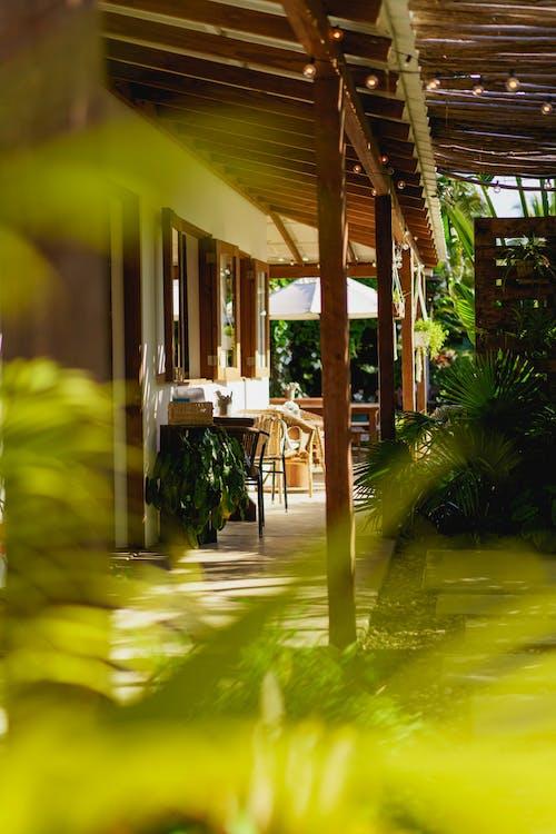 Vagamundo kafe Dominik Cumhuriyeti'nde açık hava kafe dekorunu ve tasarımını çevreleyen bitkiler