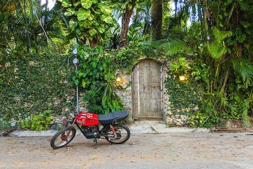 Dominik Cumhuriyeti ProCab Cabarete mahallesinde yapraklı ahşap duvarın yanına park edilmiş motosiklet