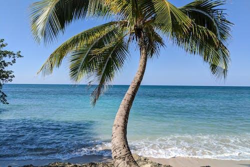 Rio San Juan Dominik Cumhuriyeti'ndeki beyaz kum plajı Playa los Minos'ta turkuaz suları olan palmiye ağacı