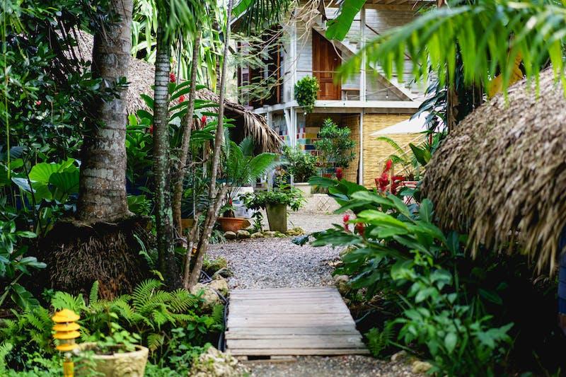 Palmiye ağaçları ve tropik bitkilerle kaplı tahta kaldırımları ve patikaları olan sörf kampı oteli mülkü