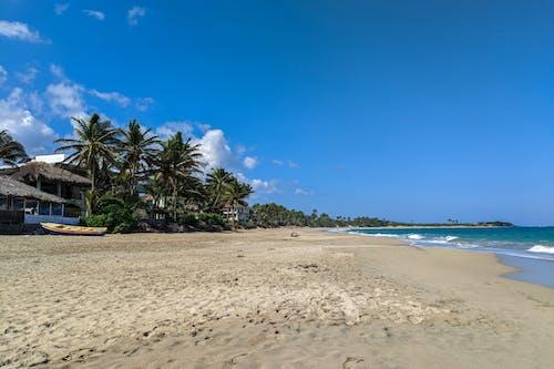 DR'de palmiye ağaçlarıyla kaplı sörfçü plajı