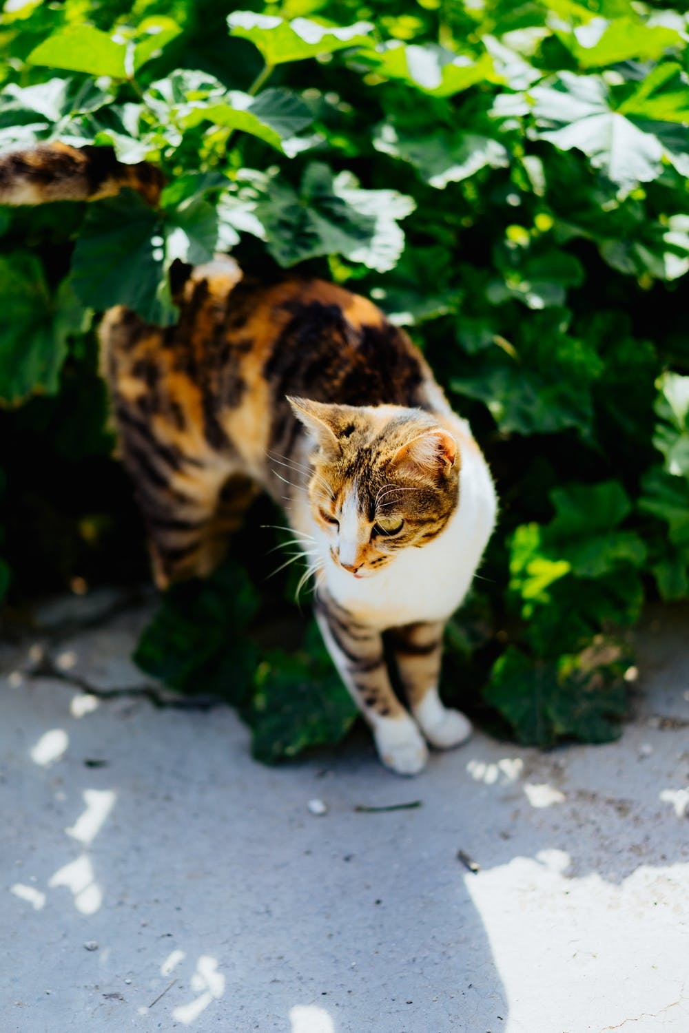 Brown and white striped cat near carmel shuk tel aviv israel