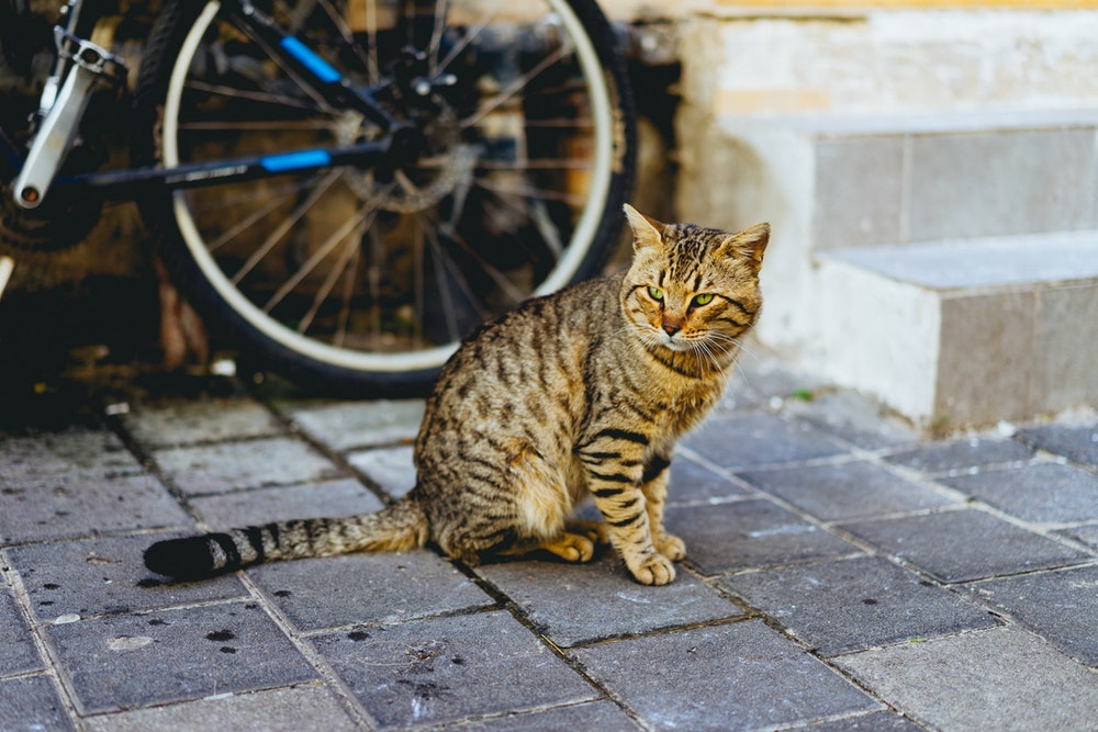 A cat at Carmel Market, Tel Aviv, Israel