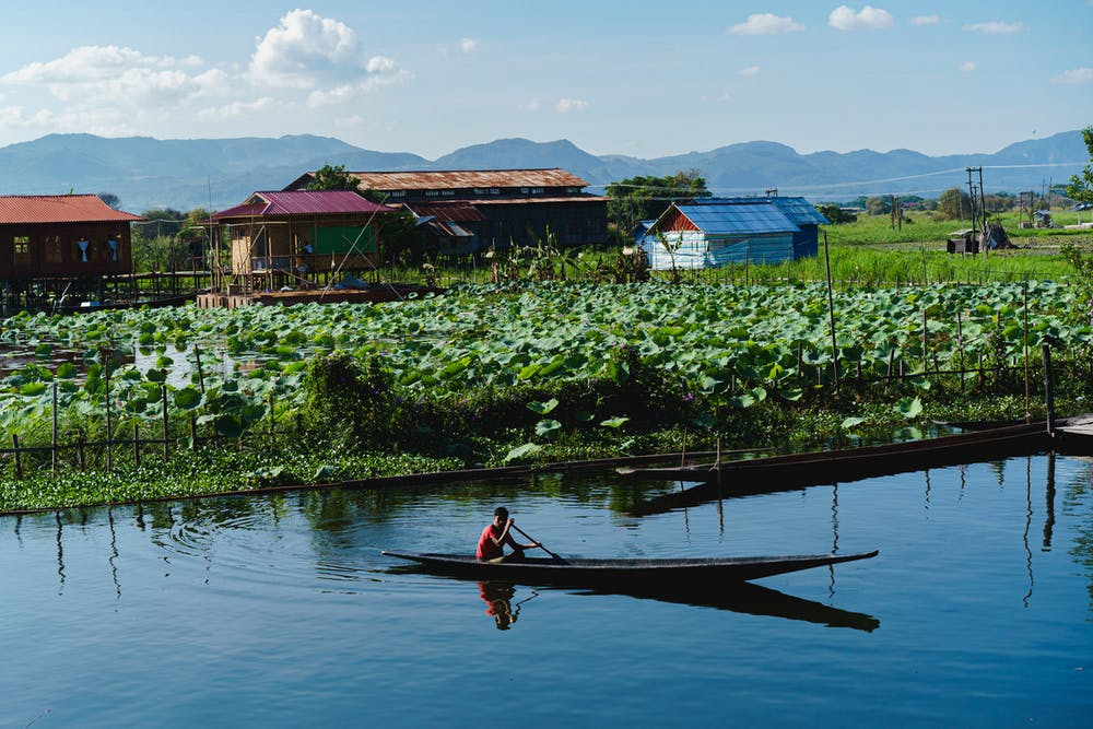 Burmese man rowing a wooden boat next to the floating gardens of the lake communities at Inle Lake Myanmar