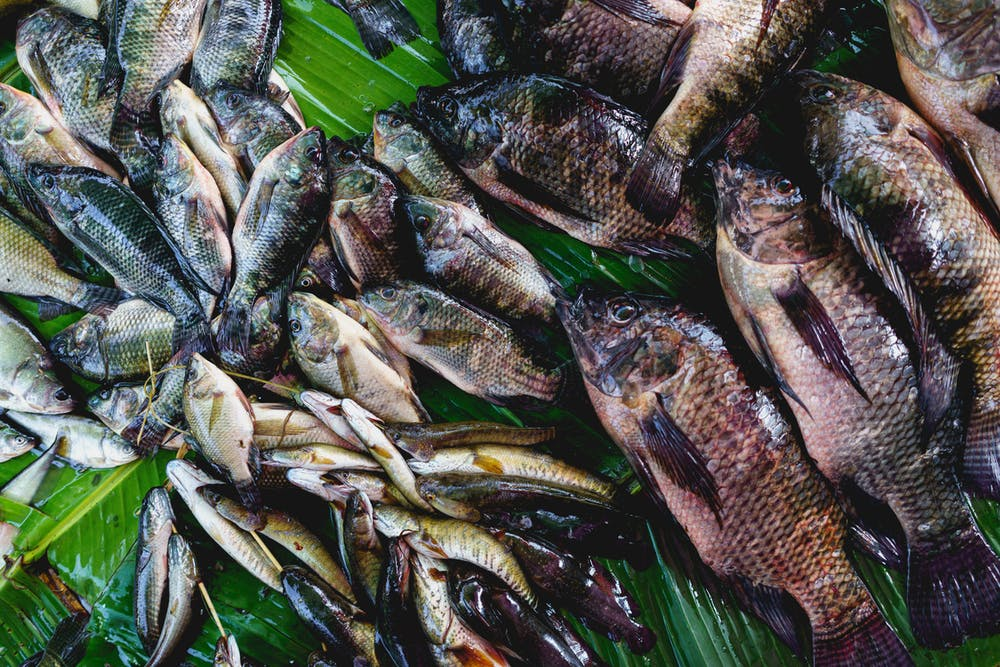 Fresh fish for sale at market stall of Nyaungshwe Myanmar village market in central downtown area