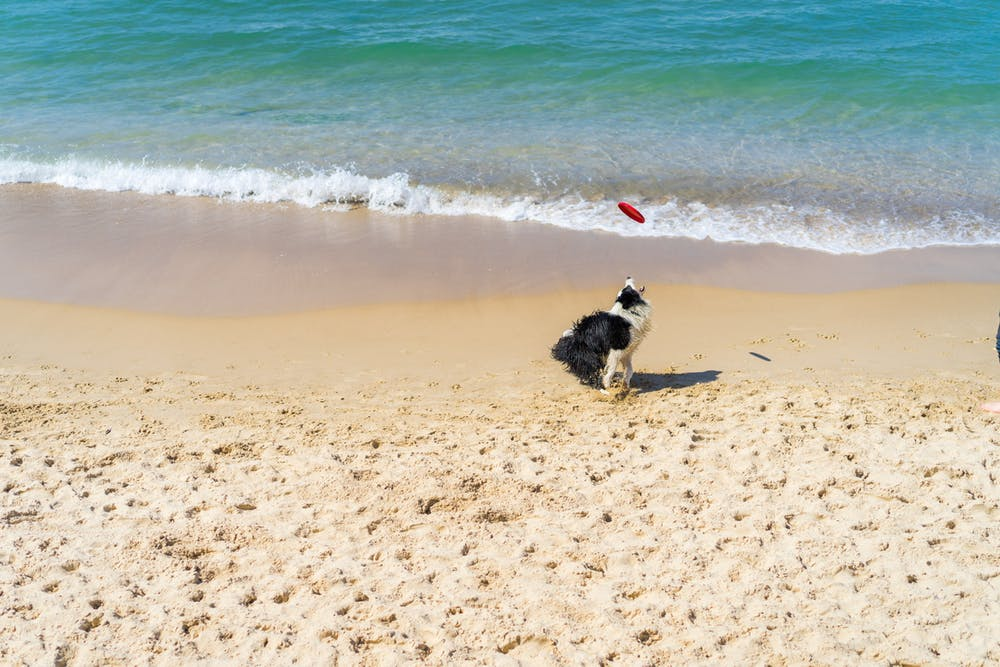 Dog catching a frisbee in the sand