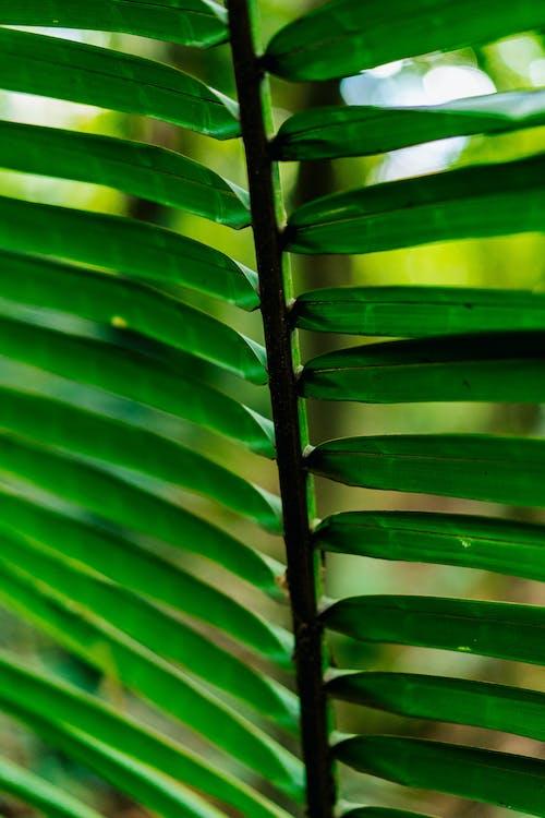 Yeşil tropik bitki bir gövdeden gelen uzun dar yaprakların yakın çekim