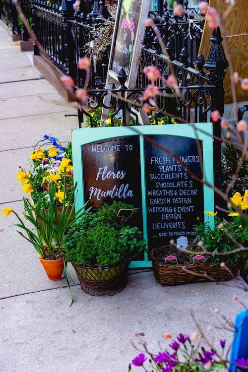 Boston'da bir kaldırımda bir çiçekçi tabelasının yanında saksı çiçekleri ve bitkiler