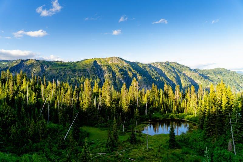 Çam ağaçları ve doğal bir göl ve mavi gökyüzü ile altın saatte Mt Rainier Milli Parkı'nın görünümü