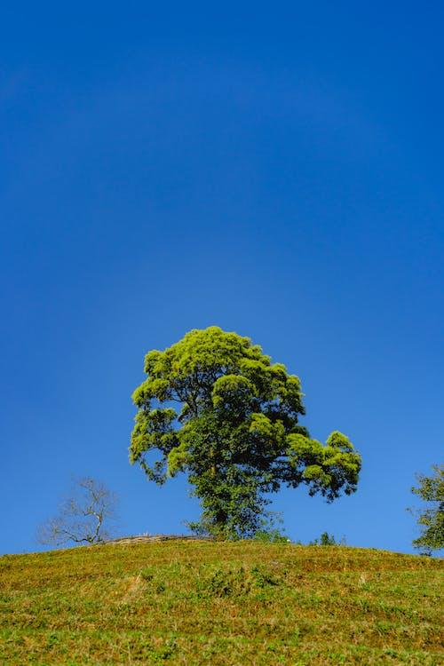 Derin mavi gökyüzüne karşı brokoli gibi görünen tek ağaç
