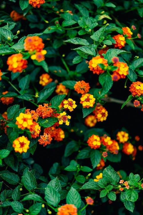 Bir evin dışında yeşil yapraklı küçük kırmızı, turuncu ve sarı çiçekler