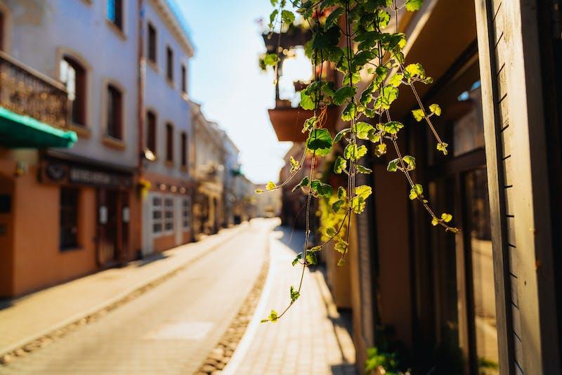 Eski şehir Vilnius Litvanya'da bir yerleşim caddesinde asılı bir bitkinin yapraklarını aydınlatan güneş ışığı