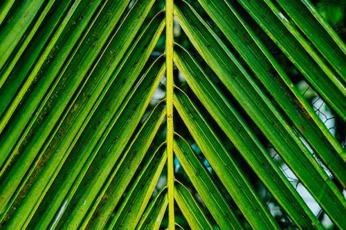 Güney Amerika'da tropik bir tropik bitkinin V şeklinde yaprakları