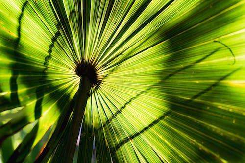 Tropikal bir bitki yaprağındaki gölgeler