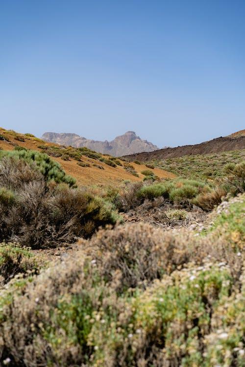 Açık bir günde kısa çöl çalılıklarıyla mor dağlar ve sarı çöl