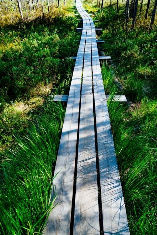 Yeşil çimenli bataklıkta bir yürüyüş yolundan geçen yeni ahşap tahta kaldırım