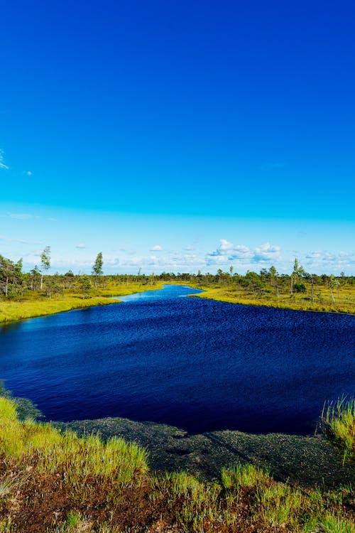 Yeşil bataklık ve berrak mavi gökyüzü ile çevrili parlak mavi su kütlesi