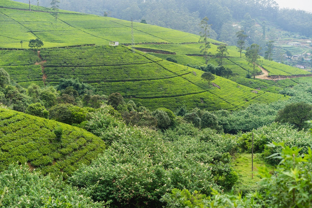 Cover image for Green Things in Sri Lanka. Read more by visiting the article!