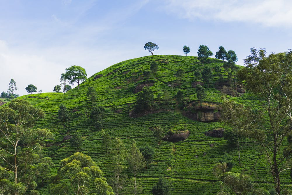 Rolling green tea hills in Sri Lanka