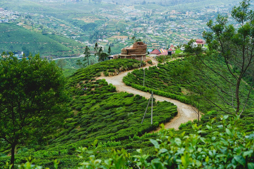 Path and green hills in Nuwara Eliya, Sri Lanka