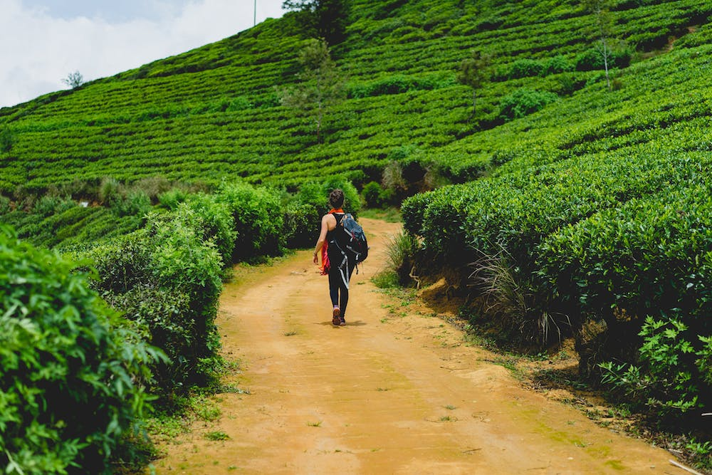 Women walking on a path though a tea plantation in Sri Lanka
