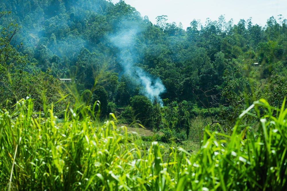 Burning smoke in a field of green