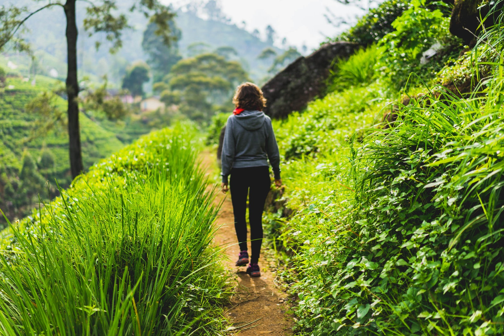 Girl walking in tea field