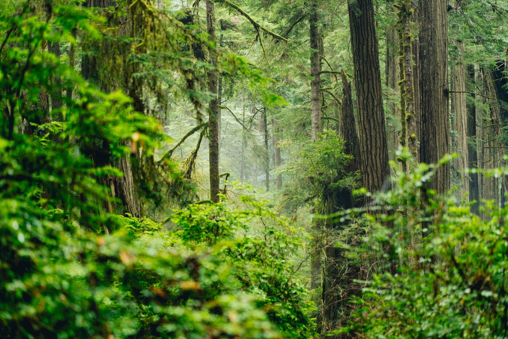 Cover image for Tall Trees and Nature at the Redwoods. Read more by visiting the article!
