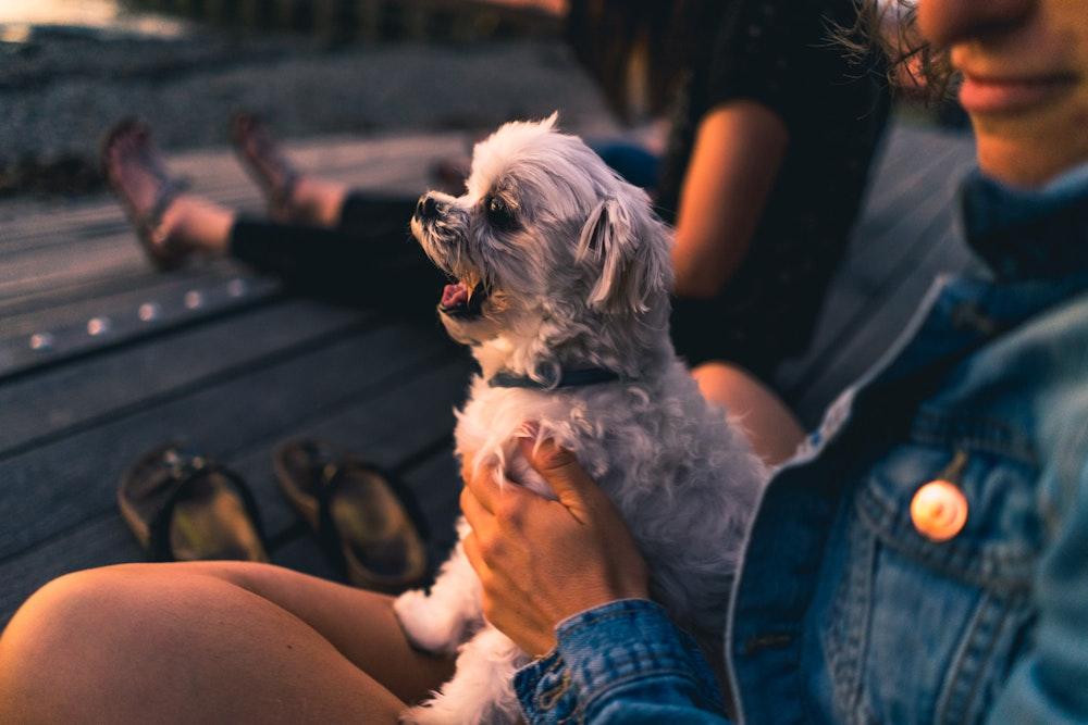 Dog Yawning at golden hour